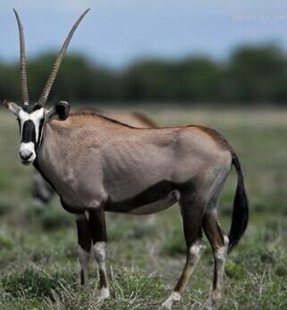 非洲肯尼亚野生动物