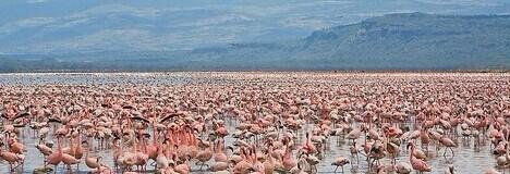 非洲野生动物
