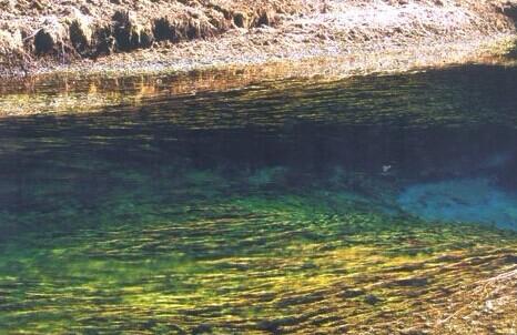 翠海水中草景象2010年