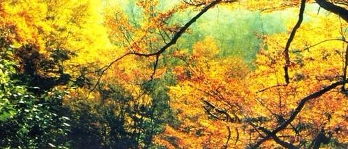 凯发k8娱乐下载地址秋季秋天最美9月份10月11月层林尽染