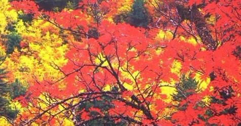 凯发k8娱乐下载地址秋季秋天红叶迎秋最美季节9月份10月11月