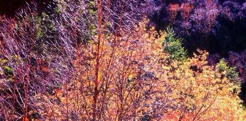 凯发k8娱乐下载地址秋季桦林红叶颜色2010年