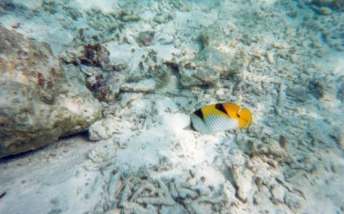 马尔代夫椰子岛Kurumba Maldives海底