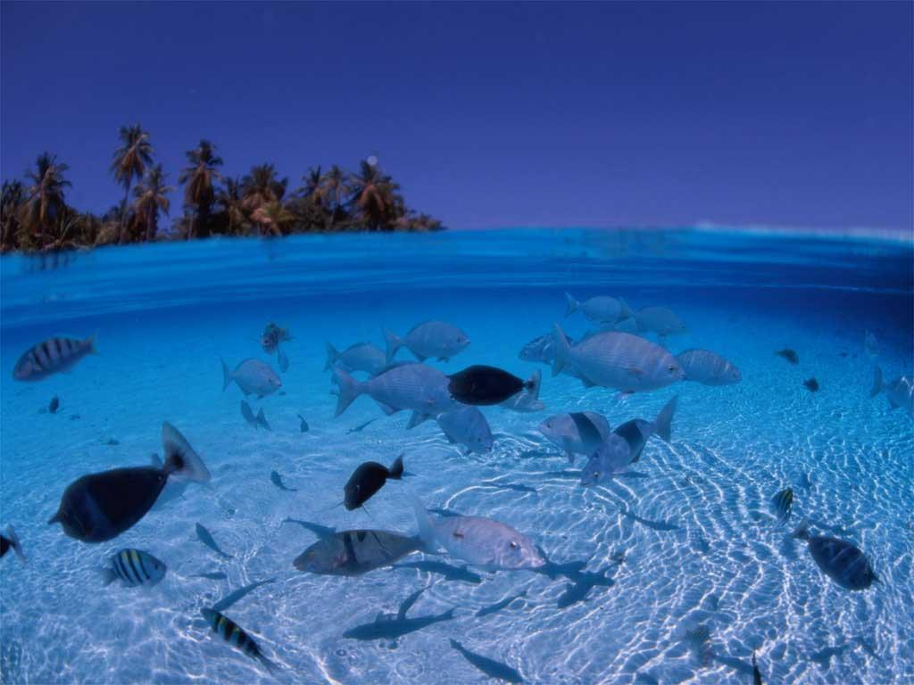 马尔代夫天堂岛水底鱼群