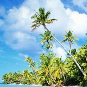 马尔代夫天堂岛海边热带植物